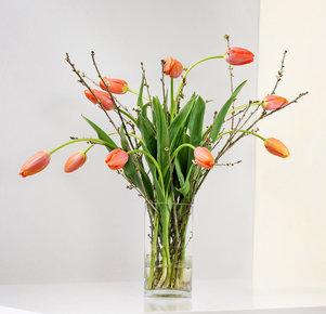 10 französische Tulpen mit Kirschzweigen