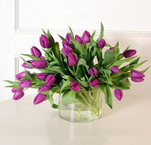 30 lilafarbene Tulpen