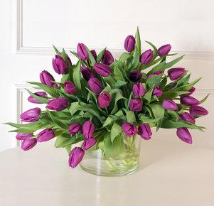 40 lilafarbene Tulpen