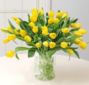40 gelbe Tulpen