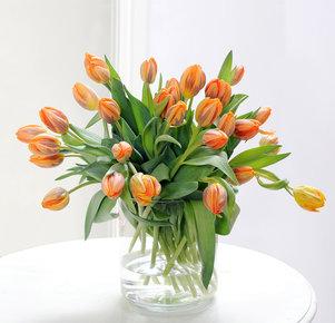 30 orangefarbene Tulpen