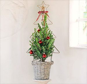 """Zuckerhutfichte """"Klassische Weihnacht"""""""