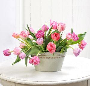 20 rosafarbene gefüllte Tulpen