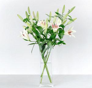 5 weiße Lilien