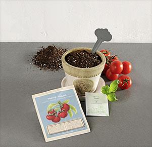 Anzucht-Set Tomate
