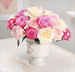 20 Duftrosen (Trendy Fragrant®, Pink O´Hara®, White O´Hara®)