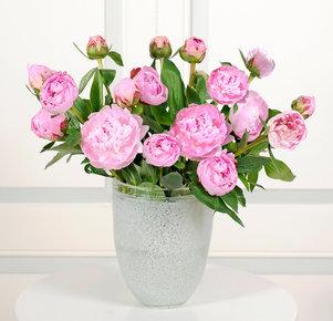 20 rosafarbene Pfingstrosen