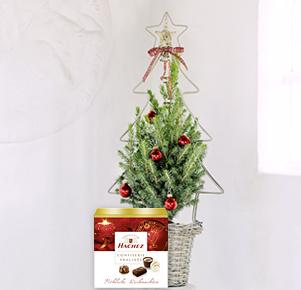 """Zuckerhutfichte """"Klassische Weihnacht"""" mit Hachez Weihnachtspralinen"""
