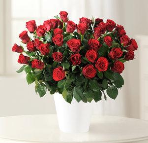 "40 Rote Rosen ""Red Calypso®"""