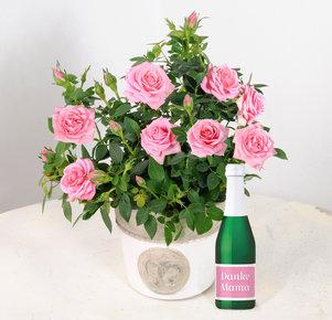 "Rosafarbene Topfrose im Übertopf mit Sekt ""Danke Mama"""