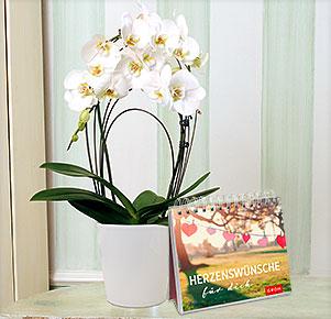"""Weiße Orchidee """"Rainbow"""" im Übertopf mit Aufstellbuch """"Herzenswünsche für dich"""""""