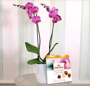Pinkfarbene Orchidee im Übertopf mit Hachez Muttertagspralinen