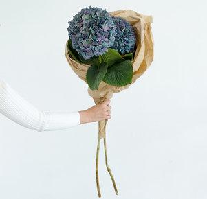 Blau-violette Hortensie