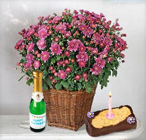 Lila Chrysantheme im Korb-Übertopf mit Geburtstagstörtchen und -sekt