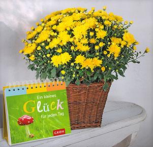 """Gelbe Chrysantheme mit Aufstellbuch """"Ein kleines Glück für jeden Tag"""""""