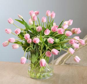 40 rosafarbene Tulpen