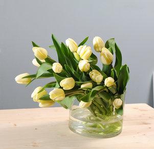 20 vanillefarbene Tulpen