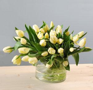 40 vanillefarbene Tulpen