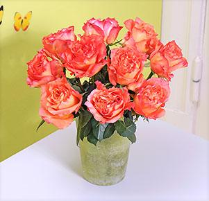 10 zart duftende Rosen Free Spirit®