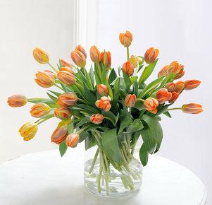 40 orangefarbene Tulpen