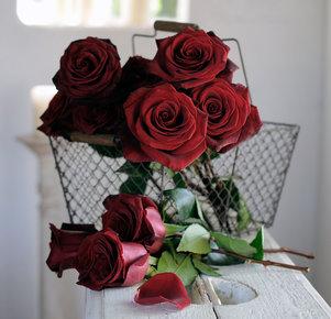 "10 schwarze Rosen ""Black Baccara®"""