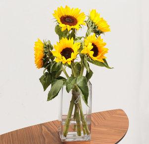 5 gelbe Sonnenblumen