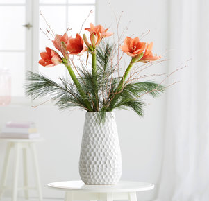 3 Stiele Amaryllis Desireé in Orange und Kupfer
