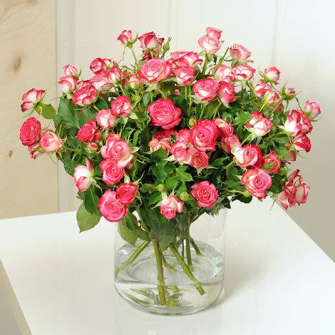 10 rosa Sprayrosen Safina®