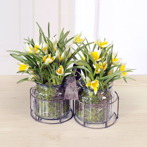 botanische tulpen im glas. Black Bedroom Furniture Sets. Home Design Ideas