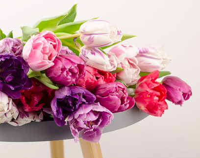 Mitarbeiterliebling Tulpen