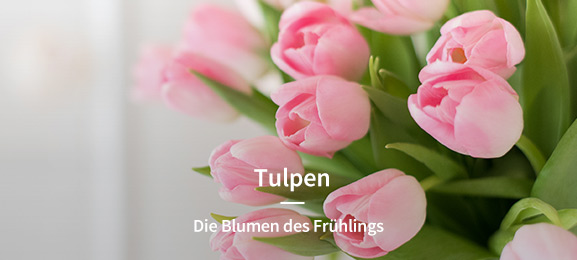 Tulpen/