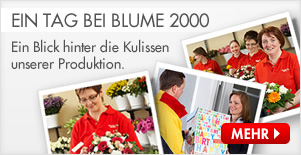 blumen online geschenkideen und blumengr e blume2000. Black Bedroom Furniture Sets. Home Design Ideas