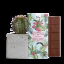 """Pflanze Kaktus """"Langa"""" im Betonblock mit Schokotafel """"Schön, dass es dich gibt"""