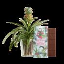 """Pflanze Ananas-Pflanze """"Annis Pineapple"""" mit Schokotafel """"Schön, dass es dich gibt"""