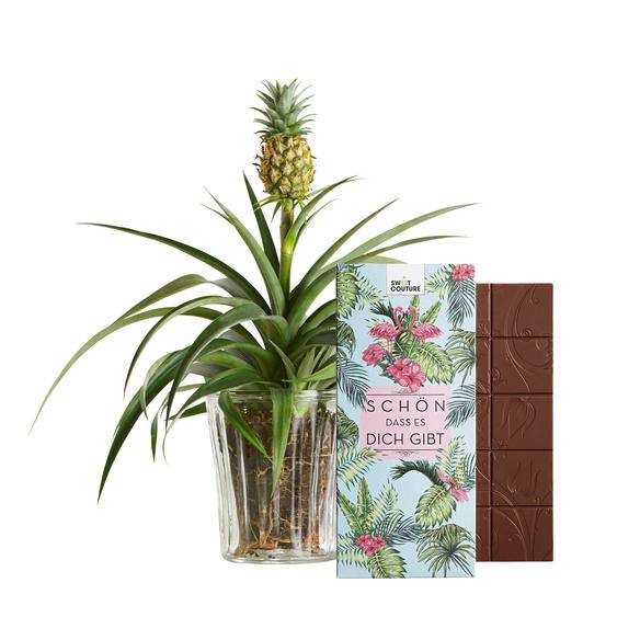 Pflanze  Ananas-Pflanze mit Schokolade Schön, dass es dich gibt