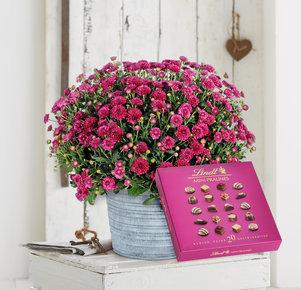 Violette Chrysantheme mit Lindt Mini Pralinés