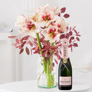 3 Stiele Amaryllis Showmaster mit Champagner in Weiss und Rot