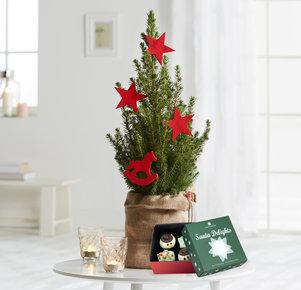 Pflanze Roter Weihnachtstraum mit Cupcakes in Weiss, Rot, Grün und Braun