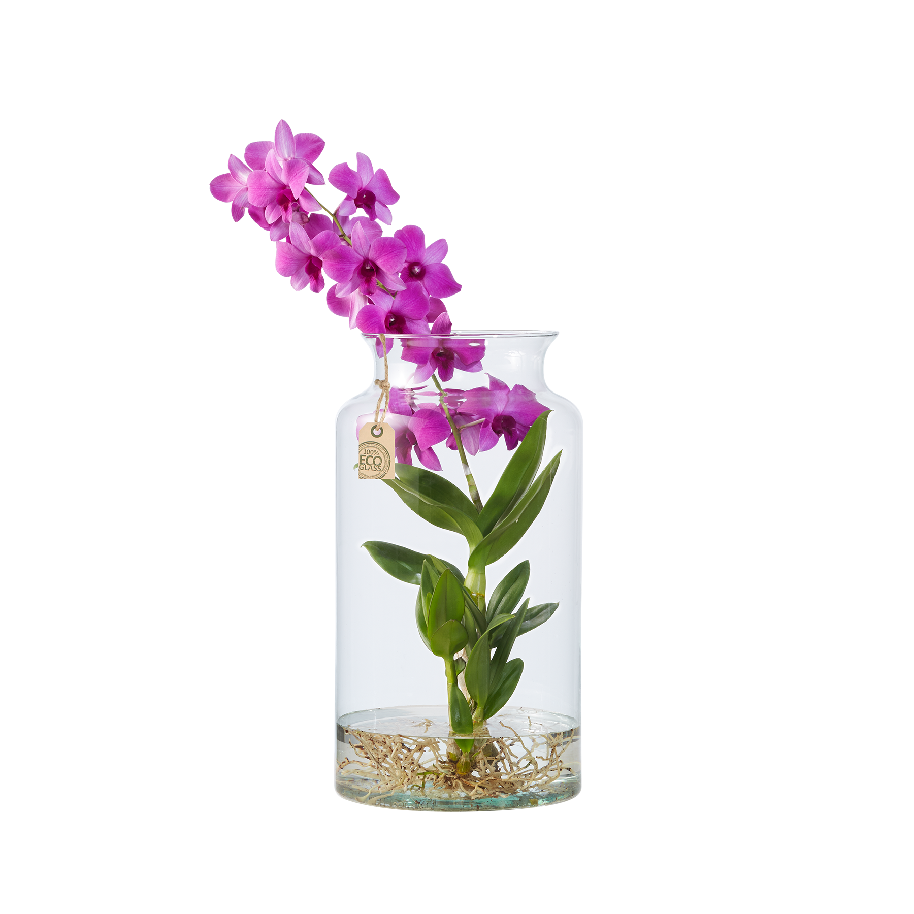 dendrobium water plant in eco vase 100190. Black Bedroom Furniture Sets. Home Design Ideas