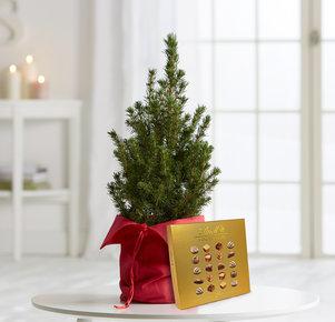 Pflanze Vorfreude mit Lindt Mini Pralinés in Rot, Gold und Grün