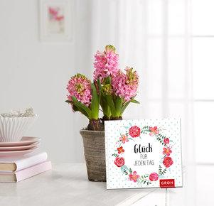 Pflanze Rosane Hyazinthe mit Buch Glück für jeden Tag in Rosa, Grau und Grün