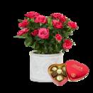 Pflanze Pinke Rose mit Lindt Herz