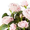 Topfrose in Rosé im Übertopf