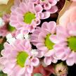 Blumenstrauß  Alles Liebe mit feinen Macarons