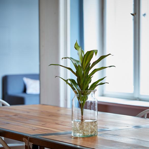 Kiwi Water Plant mit ECO GLASS