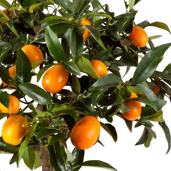 Mini-Orangen im Korb