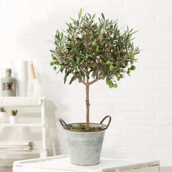 Olivenstämmchen im Zinkübertopf