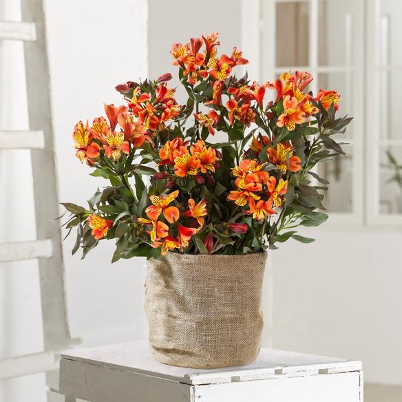 https://static.blume2000.de/pictures/100843/022_Alstromerie-orange-gelb.jpg