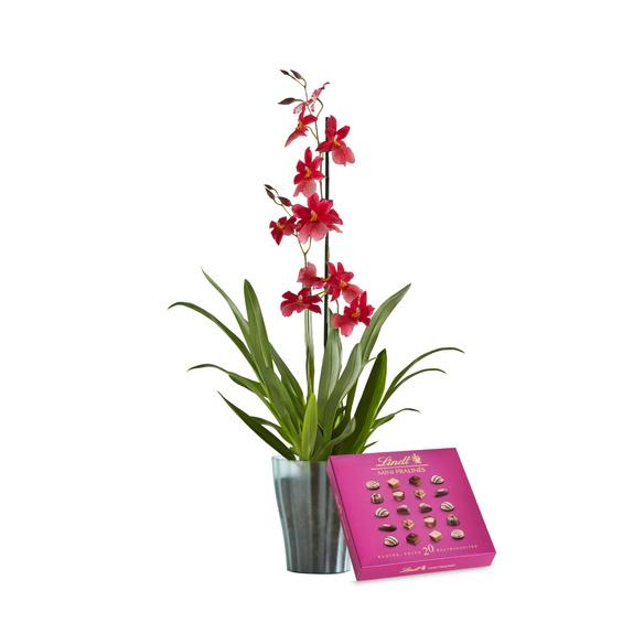 Orchidee Bon Moment mit Lindt Mini Pralinés