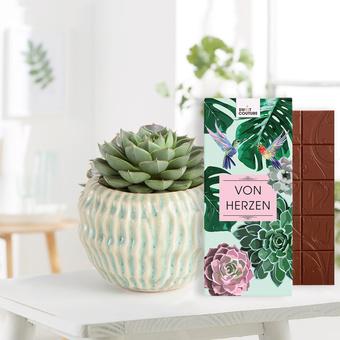 Sukkulente Echeveria mit Schokoladentafel Von Herzen